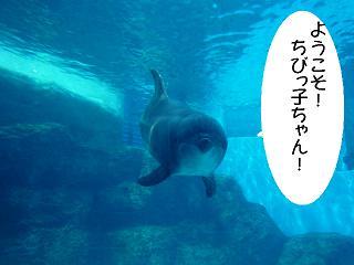 maika2203172.jpg