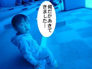 maika2203178.jpg