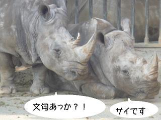 maika22040711.jpg