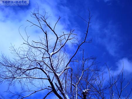 PICT0078.jpg