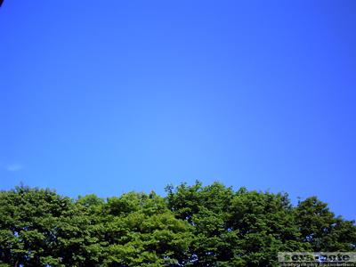 PICT01810.jpg