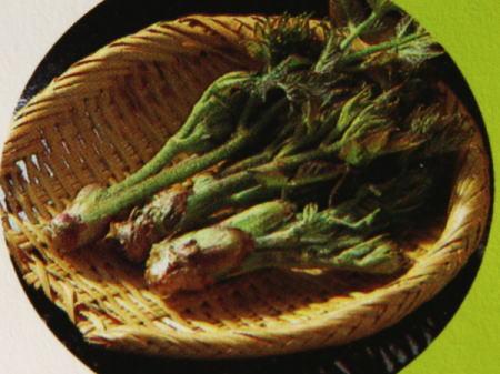 天然山菜 生うど(ヤマウド)は美味しい!