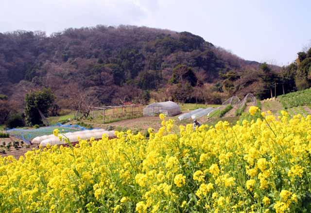 2010koyasunosato2
