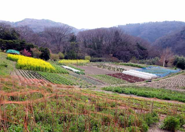2010koyasunosato1