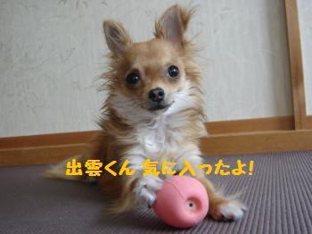 DSC03651_convert_20110610173706.jpg