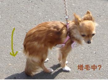snap_akiyu2_201133135120.jpg