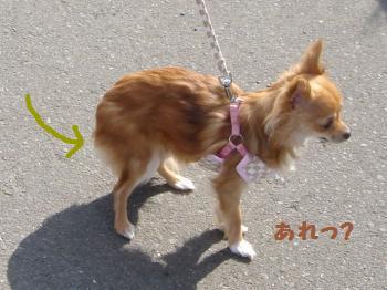 snap_akiyu2_2011331854.jpg