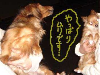 snap_akiyu2_201134125616.jpg