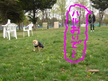 snap_akiyu2_201150224959.jpg