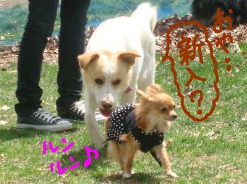 snap_akiyu2_201151132211.jpg