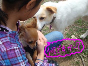 snap_akiyu2_201151132737.jpg
