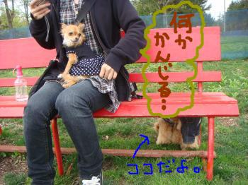 snap_akiyu2_201151143014.jpg