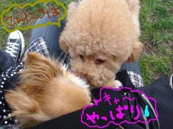 snap_akiyu2_201151143941.jpg