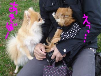 snap_akiyu2_201151144443.jpg