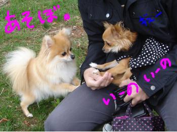 snap_akiyu2_201151144816.jpg