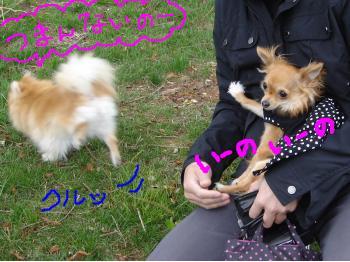 snap_akiyu2_201151145338.jpg