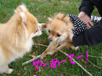 snap_akiyu2_20115114569.jpg