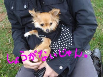 snap_akiyu2_201151145925.jpg