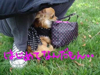 snap_akiyu2_2011511522.jpg