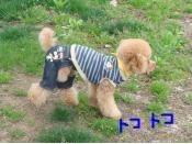 snap_akiyu2_201151154015.jpg