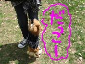 snap_akiyu2_201151184933.jpg