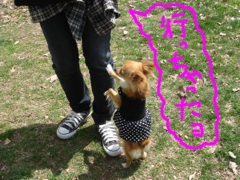 snap_akiyu2_20115118529.jpg