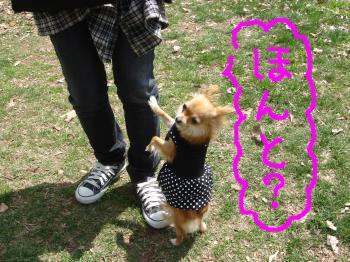snap_akiyu2_201151185440.jpg