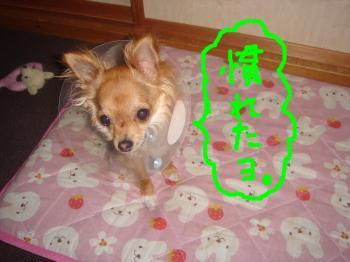 snap_akiyu2_201152111328.jpg