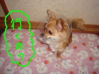 snap_akiyu2_201152111922.jpg