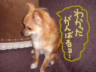 snap_akiyu2_201156125720.jpg