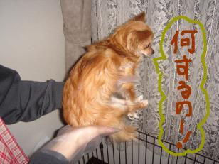 snap_akiyu2_201156131933.jpg