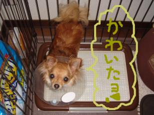 snap_akiyu2_201156132919.jpg