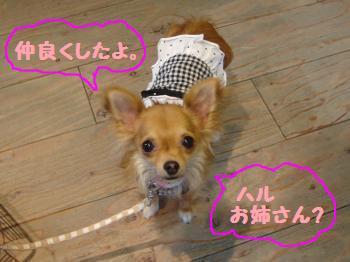 snap_akiyu2_201172115343.jpg