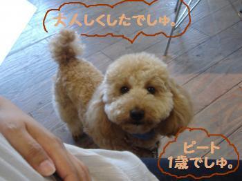 snap_akiyu2_20117212019.jpg