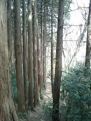 20110320飯能の山中.JPG