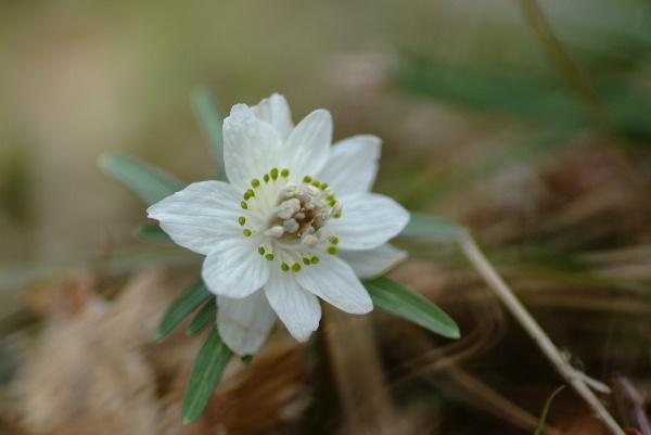 白い花びらは本当は顎・・緑の丸がかわいいでしょ