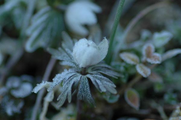 霜がおりて寒そうでした(+_+)