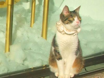 おしゃれ猫