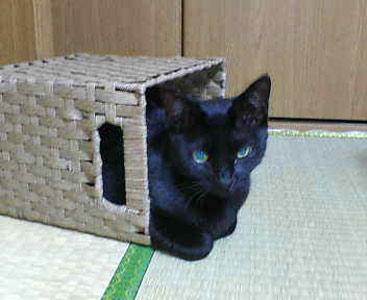 黒猫のクーちゃん