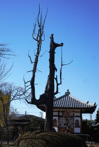 ドラゴンの木
