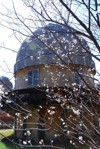 桜と第一赤道儀室
