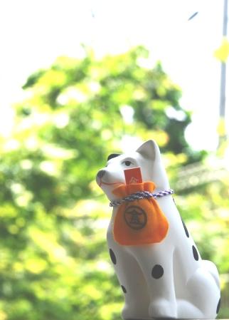 白あずき家のこんぴら狗