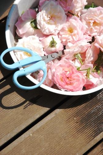 バラの剪定