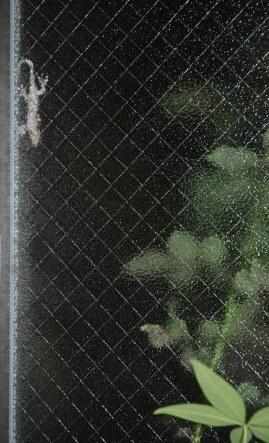 窓のヤモちゃん