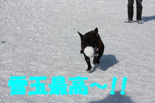 IMG_9745_convert_20100214003818.jpg