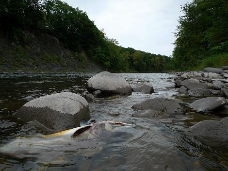 秋のショコツ川