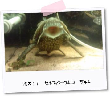 [photo05232837]20110305204411