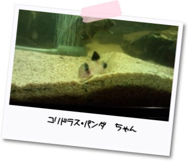 [photo05232193]20110305180451