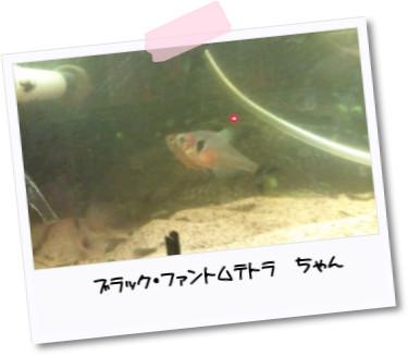 [photo05232025]20110305180514