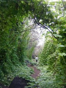 kealia trail3